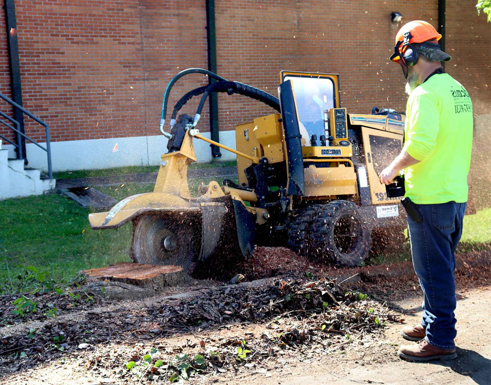 Tree stump being removed by stump grinding machine