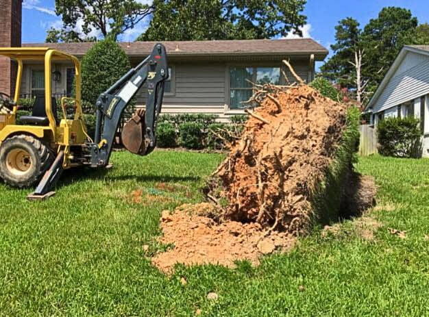 A tree stump that has been extracted from the ground by a backhoe