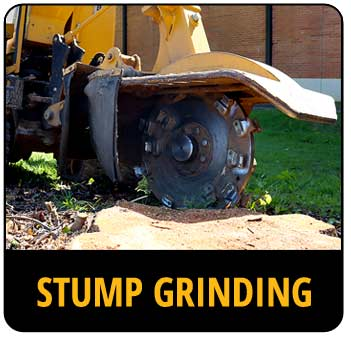 Call-to-action image for stump grinding